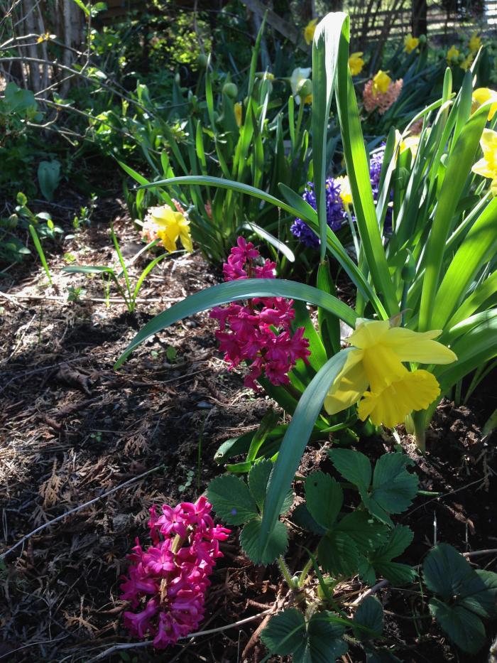 Dikt og Poesi, Vers, Poem,  Ordlek, Verselinjer, Versemål,  Lyrikk, blåveisdrøm, blomstrende gleder, berører hjerter blomstene, Forfatter R.R. Kile