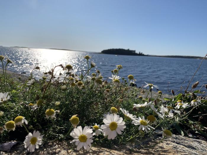 Ordlek og Poesi,bølgeglitter på sjø,  jeg tror endorfiner er solfeer, vannperler leker i lufta, vinteren har lagt seg flat for den spirende vår, årstidene danser rundt med oss, Dikt, Vers, verselinjer, versemål, ordlek poem, , lyrikk, Forfatter R.R. Kile