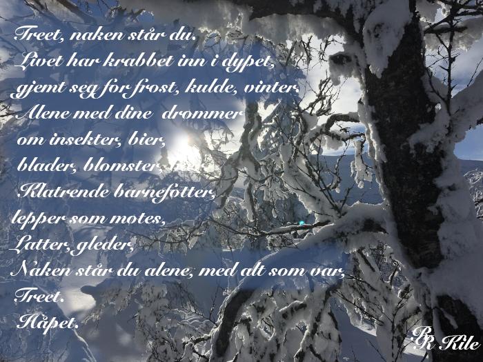 Ord og versemål, treet, håpet, vi puster sammen, mennesker og trær, dyr, hjerter til hjerter, hjertet menneskers sanne hjem. Kan vi ikke bare tenne lys i sola så den ser bedre, dikt, poesi, lyrikk, forfatter R.R. Kile.