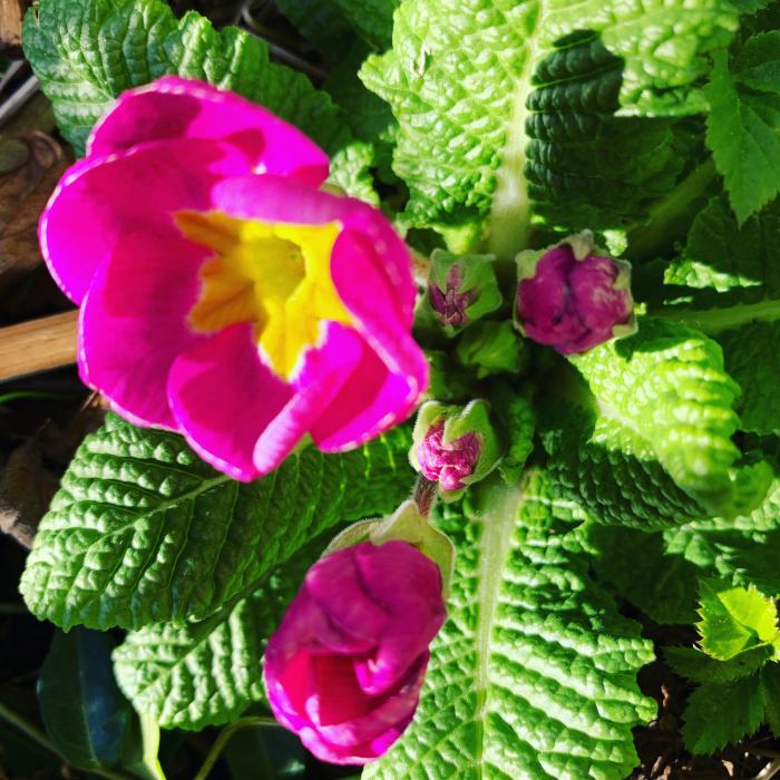 Ordlek og Poesi, våren byr sommeren sin lengtende kjærlighet, jeg tror endorfiner er solfeer, vannperler leker i lufta, vinteren har lagt seg flat for den spirende vår, årstidene danser rundt med oss, Dikt, Vers, verselinjer, versemål, ordlek poem, , lyrikk, Forfatter R.R. Kile