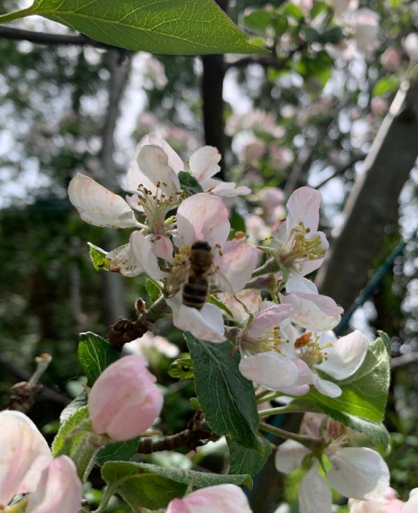 Poesi, Poem, Ordlek, Verselinjer, versemål, hode, hjerte, hånd, å drysse vannperler, vi er mer enn epleskall, syng meg en diamant, være som ei måke er, lille blomstervokter,   Forfatter R.R. Kile
