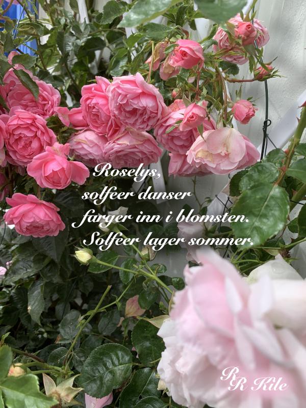 dikt, poesi, poem, ordlek, ordvers, verselinjer, versemål. til havvinders sang. Yin og yan, Så mye som blir åtte,  frukt og grøde, solfeer lager sommer, Forfatter R.R. Kile