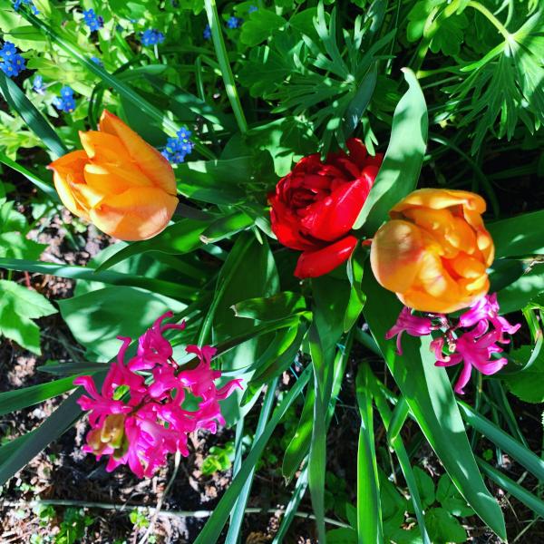 Poesi, lyrikk, dikt, vers, så mange solnedganger å se, gleder i ord, å male vakre ord rundt mennesker, lytte til vinden, drømmer blomster, Forfatter R.R. Kile
