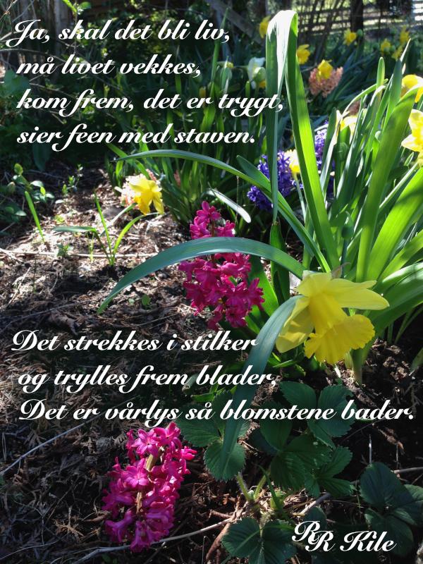 Dikt, poem, versemål, ordlek, verselinjer, tempel, ditt navn er kvinne. kvinner og tempelet,  en bestefars hand, en bestefar som klatrestang. Trekke blomster av jorda,  Forfatter R.R. Kile.