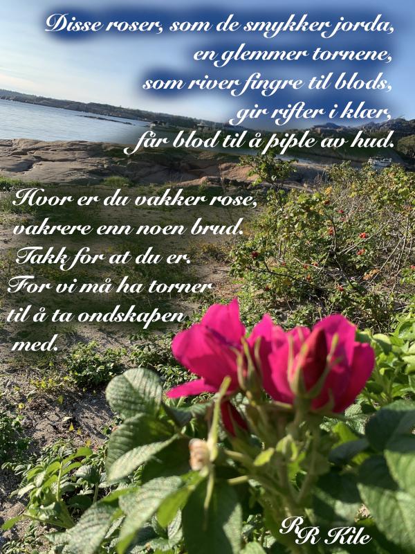 Vers, dikt, poesi, lyrikk, å danse vannperler sammen, ta på dansesko, disse roser som smykker jorda, Forfatter R.R. Kile.