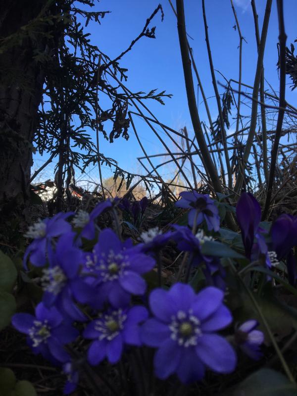 Dikt og Poesi, Vers, Poem,  Ordlek, Verselinjer, Versemål,  Lyrikk, blåveisdrøm, blomstrende gleder, Forfatter R.R. Kile