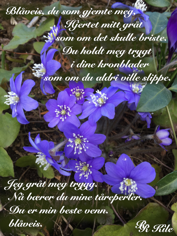 Dikt, poesi, lyrikk, poem, versemål, veselinjer, ordlek, tårer i bølgen, de magiske harmonier, Han bar tungt han Atlas, Trygghet i en blåveis,  Forfatter R.R. Kile