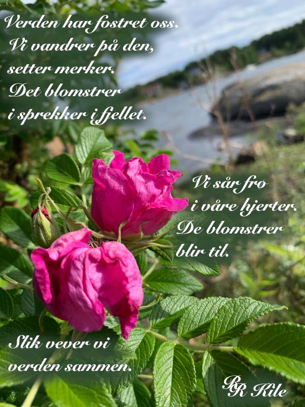 Vers, lyrikk, poesi, poem, verselinjer, versemål, ordlek, I fremtida skal andre mennesker snakke inn i de steder vi forlot, ei mormor og ei jente i gang, å vokse gjennom ørene, Forfatter R.R. Kile.