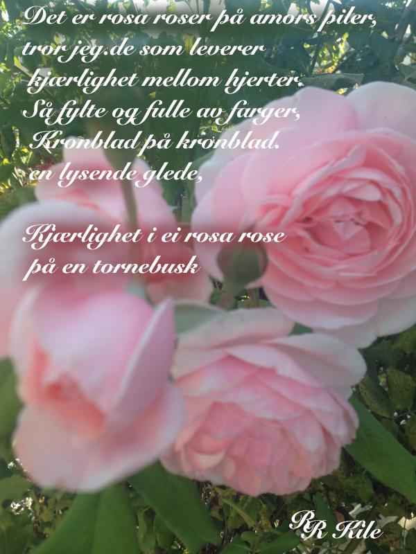 Dikt, Poem, versemål,. lyrikk,. verselinjer, ordlek, ordgleder, tungt og lett danser livet over jorda, av drømmespinn danser morgenrøden over jord, det er rosa roser på amors piler tror jeg, Forfatter R. R. Kile
