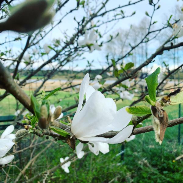 Dikt, Magnolia blomster,  tåkehav i fløyelsdans, å danse mobbing under fot og hinke mot en regnbue, ha trollsverd,  vers, forfatter R.R. Kile