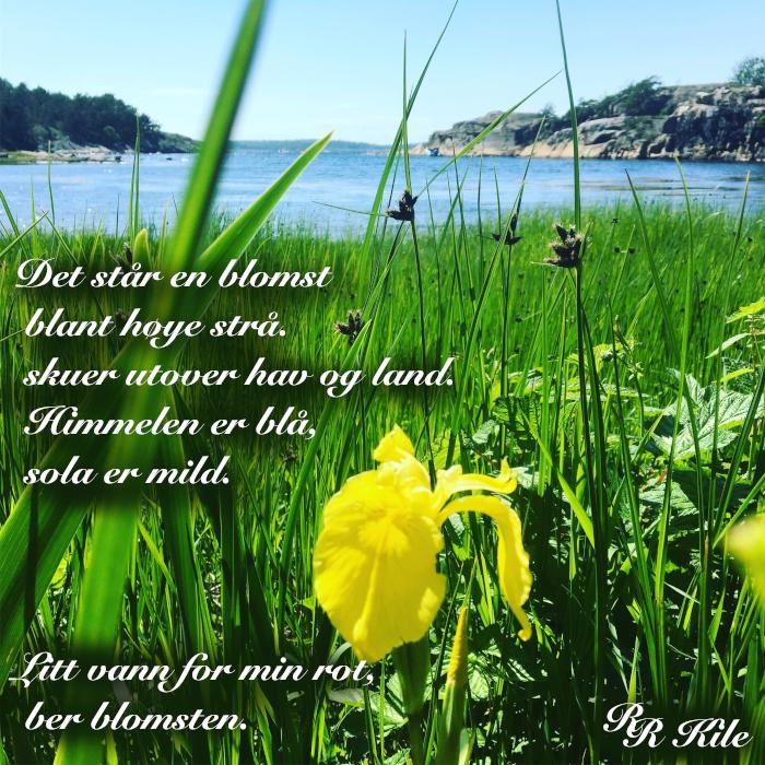 Dikt, poesi, lyrikk, poem, versemål, veselinjer, ordlek, tårer i bølgen, de magiske harmonier, Han bar tungt han Atlas, gir bien av din nektar, Forfatter R.R. Kile