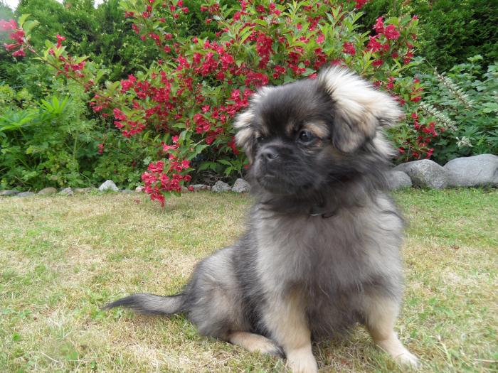 vers, poem, lyrikk, versmål, verselinjer, ordlek, naturglede,  fruktens sødme blir drømt, solkyss mot huden, livet vever i sansers fylde, å søke verdens navle, et livets smykke i en hund,  Forfatter R.R. Kile