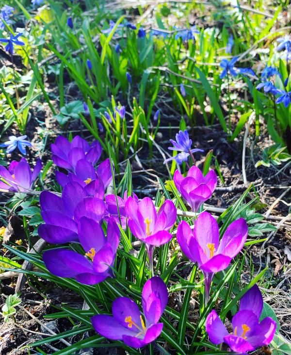 Lyrikk og ordlek,  de lokker til seg bier. blomstene, tårer som gråtes i dype slukter, våren drømmer sine barn, livets smykkesteiner, vers, dikt, poesi, forfatter R.R. Kile.