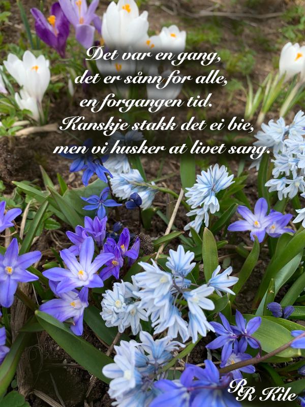 lyrikk, kanskje stakk det ei bie, vi diet ikke unger til vold,  kapp hue av sparetrolla, ikke til troll og andre monstre skal verden skjenkes, unga våre, det viktigste vi har, vers, poesi,, forfatter R.R. Kile