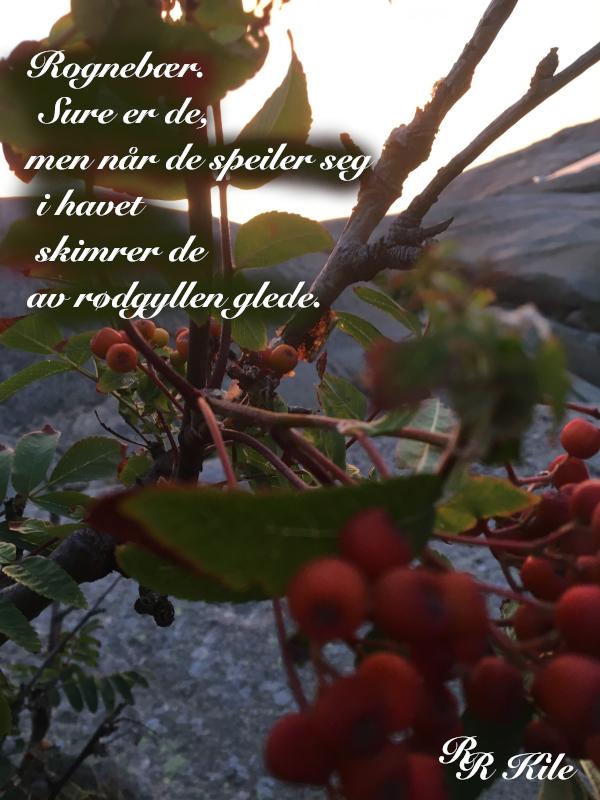 Dikt, Rognebær speiler seg i rødgyllen glede,  å skrive om jorda bare, få bære vekta av tanker, frihetens stjerne, der stjerner skinner om dagen, tidshavets bølger,  lyrikk, poesi, forfatter R.R.