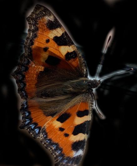 lyrikk, sommerfugler, hva hvis jeg hjelper deg opp, jeg er uskyldig i anklagen,  i ly av svarte natta dans med regnbueglød, å male med lyset fra våre hjerter,Så mange spor som aldri tråkkes på jordas golde mark,  vers, poesi,  Forfatter R.R. Kile