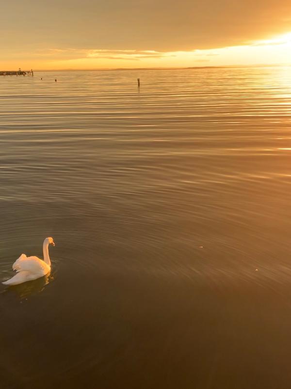 Lyrikk og ordlek, ei svanejente er gull for en svane,  tårer som gråtes i dype slukter, våren drømmer sine barn, livets smykkesteiner, vers, dikt, poesi, forfatter R.R. Kile.