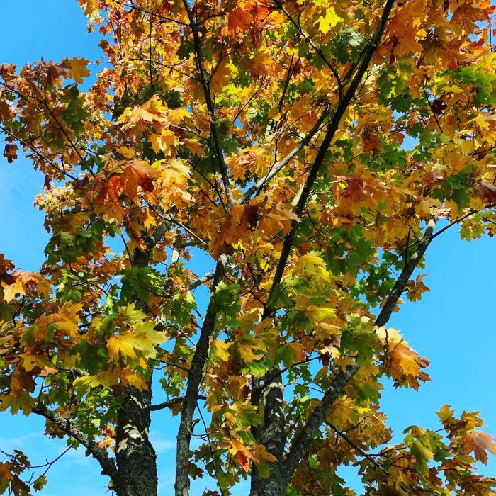 Dikt, For et smykkeskrin vi er på vandring i, på en setervang, treet, håpet, vi puster sammen, mennesker og trær, dyr, hjerter til hjerter, hjertet menneskers sanne hjem. Kan vi ikke bare tenne lys i sola så den ser bedre,  poesi, lyrikk, forfatter R.R. Kile.