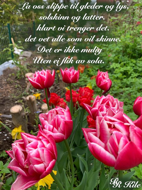 Lyrikk og ordgleder, å ville skinne, barndomslandet,  å plante verdens frø, frosten, de forkledde vanndråper, gå du, Dikt, Poesi, Forfatter R.R. Kile.