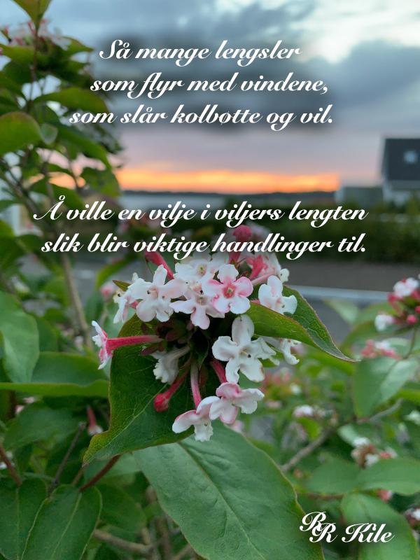 å ville en vilje i viljers lengten,  viljen drømmer om heltedåder,  bllomsterrprakt er jordas festdrakt, å drømme vann på bakken om til snø, kan jeg ikke bare hoppe med et fiskesprett, som verden drømmer om å bli sett, dikt, vers, himmelild, forfatter R.R. Kile