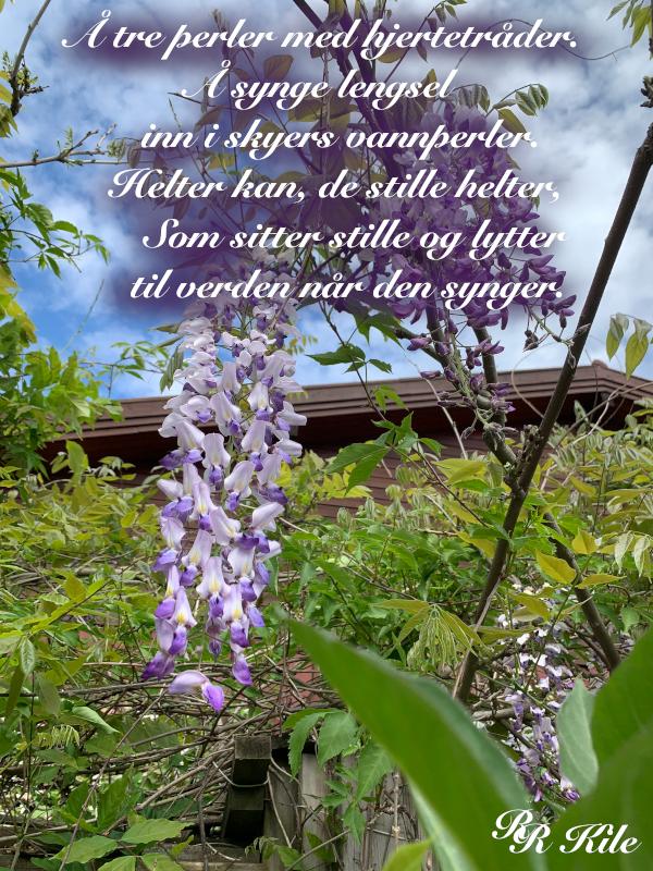 tre perler med hjertetråder, så mye en må når en er mennske, å skinne livet i et lys, barndomslandet,  å plante verdens frø, frosten, de forkledde vanndråper, gå du, Dikt, Poesi, Forfatter R.R. Kile.