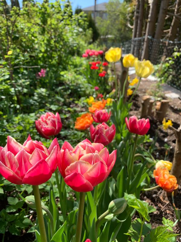 Ordlek og poem, blomsterprakt er jordas festdrakt, å drømme vann på bakken om til snø, kan jeg ikke bare hoppe med et fiskesprett, som verden drømmer om å bli sett, dikt, vers, himmelild, forfatter R.R. Kile