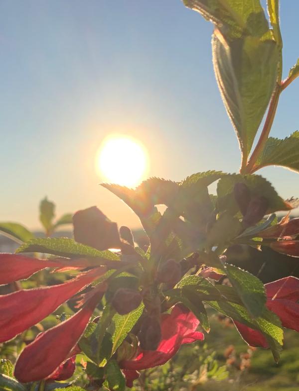 Jeg har tro på sola om vi tenner lys, Å skinne livet i et lys, barndomslandet,  å plante verdens frø, frosten, de forkledde vanndråper, gå du, Dikt, Poesi, Forfatter R.R. Kile.