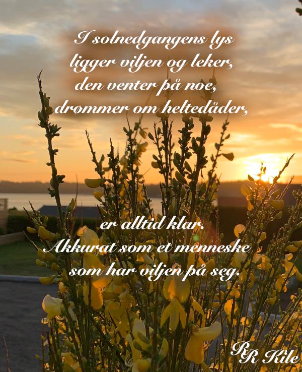 Poem, viljen drømmer om heltedåder,  blomsterprakt er jordas festdrakt, å drømme vann på bakken om til snø, kan jeg ikke bare hoppe med et fiskesprett, som verden drømmer om å bli sett, dikt, vers, himmelild, forfatter R.R. Kile