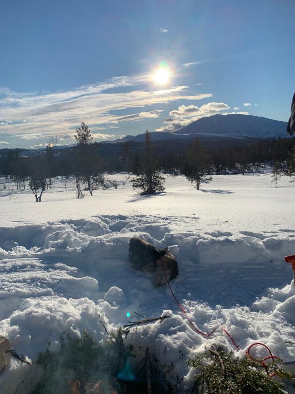 Ordlek og poem, å drømme vann på bakken om til snø, kan jeg ikke bare hoppe med et fiskesprett, som verden drømmer om å bli sett, dikt, vers, himmelild, forfatter R.R. Kile