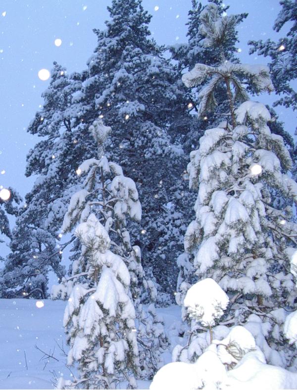 Poem og ordgleder, snøen faller tungt og lett, ertekroker og andre kroker, regnbueglød, en krokete verden kan kle seg i linjer, om den vil,  vers, poesi, Forfatter R.R. Kile