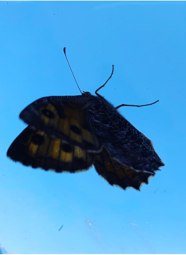 Ordgleder og Poem, alle kan bli en sommerfugl,  tenk som det faller tørke i regn,  tenk  som hjerner kan duste livet til i en tanke, blomsterbarn har tøyelige røtter, Vers, lyrikk, Forfatter R.R. Kile